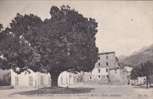 ALPES-MARITIMES.-Castellear , la Place de la Mairie , l'Orme centenaire , Fra...