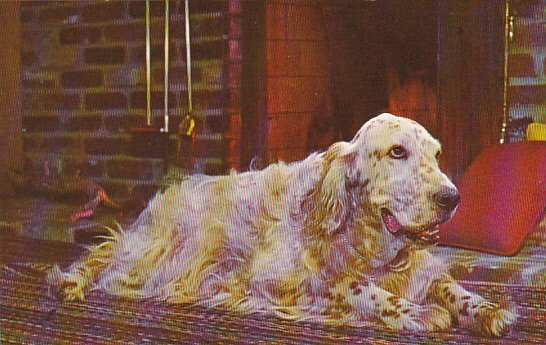 English Setter By The Fireside