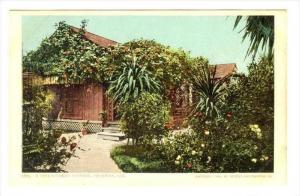 A Rose Covered Cottage, Pasadena, California, 1900-1910s