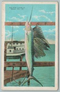 Miami Florida~Sail Fish Cause In Ocean~Vintage Postcard