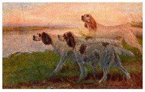 Dog ,  A Brace of Setters