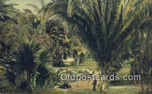 Castleton Gardens Jamaica Camera Postcard, Post Card Old Vintage Antique Unused