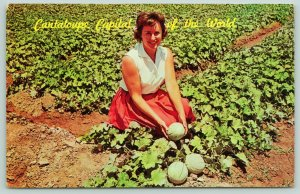 Blythe California~Woman in the Field~Cantaloupe Capital of the World~Postcard