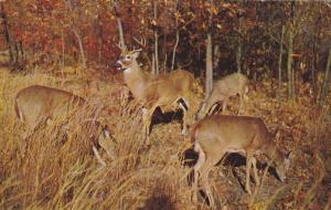 COLOMA, Michigan, PU-1956; Deer Forest At Paw Paw Lakes