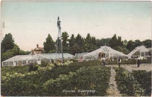Vineries , Guernsey , United Kingdom, 1900-10s