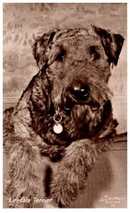 Dog ,  Airedale Terrier , artist signed