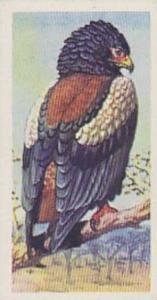 Brooke Bond Tea Vintage Trade Card Tropical Birds 1961 No 1 Bateleur Eagle