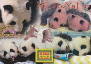 ATLANTA , Georgia , 2016 ; Baby Panda Bears Ya Lun & Xi Lun