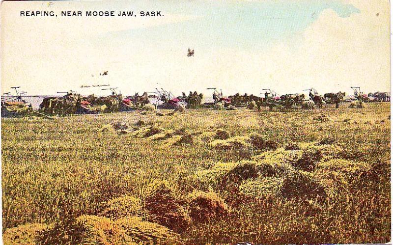 Reaping near Moose Jaw, Sask