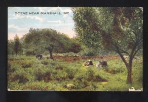 SCENE NEAR MARSHALL MISSOURI CATTLE COWS FARMING GLENNONVILLE MO. POSTCARD