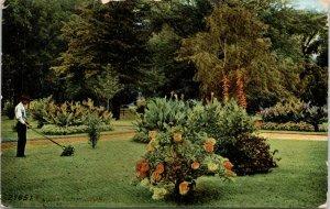 Galesburg Illinois~Park Groundskeeper Mows Around Flower Bushes 1908 Postcard