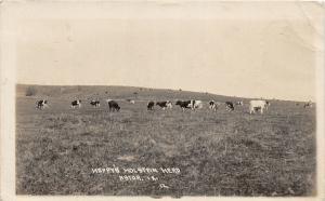 F35/ Astor Iowa RPPC Postcard 1917 Happy Holstein Herd Cows