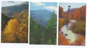 NC Mountain Views Autumn Mt. Mitchell North Carolina 3 cards