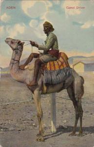 Yemen Aden Caamel Driver