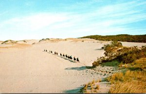 Massachusetts Cape Cod Horseback Riders On The Sand Dunes