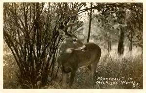 MI - Deer in the Woods.  *RPPC