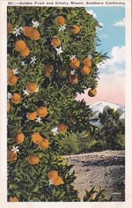 California Southern California Golden Fruit And Silvery Mountain
