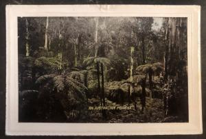 Mint Australia Picture Postcard PPC An Australian Forest View