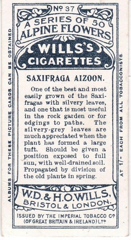 Cigarette Cards Wills Alpine Flowers No 37 Saxifraga Aizoon