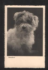 070278 KRAUSHAAR Fluffy PUPPY Dog Vintage PHOTO