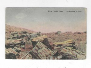 1916 In the Petrified Forest. Adamana, Arizona Postcard