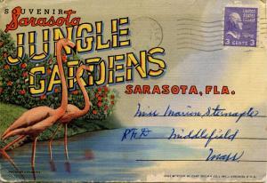 Folder - Lido Beach Casino & Sarasota Jungle Gardens, Sarasota, FL -   (18 Vi...