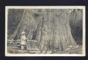 RPPC LONGWOOD FLORIDA LAKE MARY FLA. HUGE CYPRESS TREE REAL