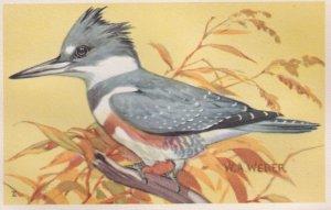 1900-1910's; Belted Kingfisher, National Wildlife Federation, Wildbird Postca...