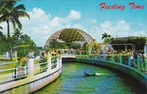Florida Miami Feeding Time In The Shark Channel At Miami Seaquarium