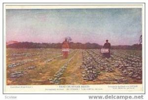 Fertilized Sugar Beets test,German Kali Works,NY,NY 00-