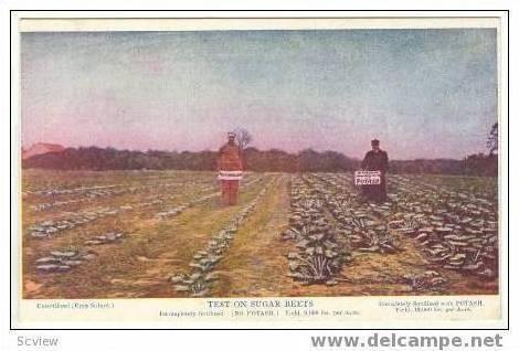 Fertilized Sugar Beets test,German Kali Works,NY,NY 00-