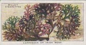Wills Vintage Cigarette Card The Sea-Shore No 49 Carrageen Or Irish Moss  1938