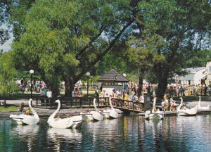 Swan Boat Ride, Centreville, Toronto Islands, Ontario, Canada, 50-70s