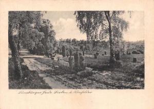 Lueneburger Heide Road Path Trees Landscape
