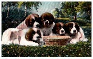 Dog , Puppies Saint Bernard