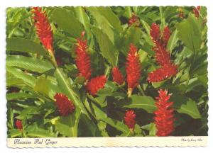 Hawaiian Red Ginger 1969 Flower Postcard 4X6