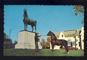 Weybridge, Vermont/VT Postcard, The Morgan Horse, Univ Of Vermont Horse Farm