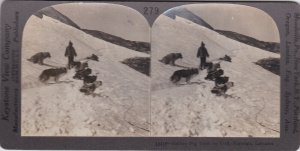 SV: Eskimo Dog Team on Trail , HOPEDALE . Labrador , Canada , 00-10s
