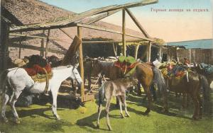 Mountain Horses  en reposec Nice antique French postcard