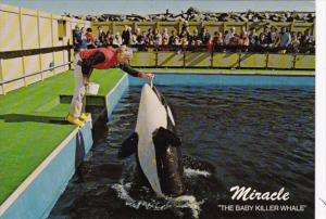 Canada Victoria Miracle The Baby Killer Whale Sealand Of The Pacific