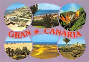 Spain Gran Canaria, Souvenir, multiviews, dunes, bird, oiseau