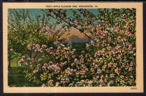Apple Blossom Time in Winchester,VA