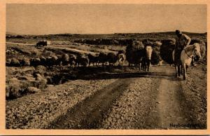 Iceland Heybandslest Hay Train