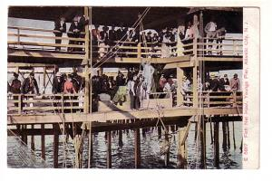 Many People on Dock Watching Fish Net Haul, Youngs Pier, Atlantic City, New J...
