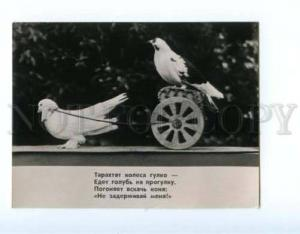 167233 DUROV CIRCUS Gove PIGEON old PHOTO Russian Card