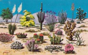 Caciti & Desert Flora of the Great Southwest , 1969