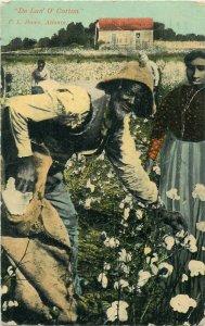 A Typical Southern Scene DE LAN' O' COTTON Man Picking 1912