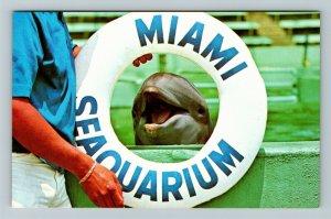 Miami FL-Florida, Dolphin, Seaquarium, Chrome Postcard