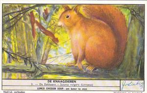 Liebig S1655 Rodents No 3 Squirrel