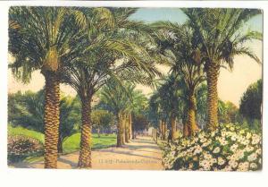 Nice Postcard Ancient castle Palms